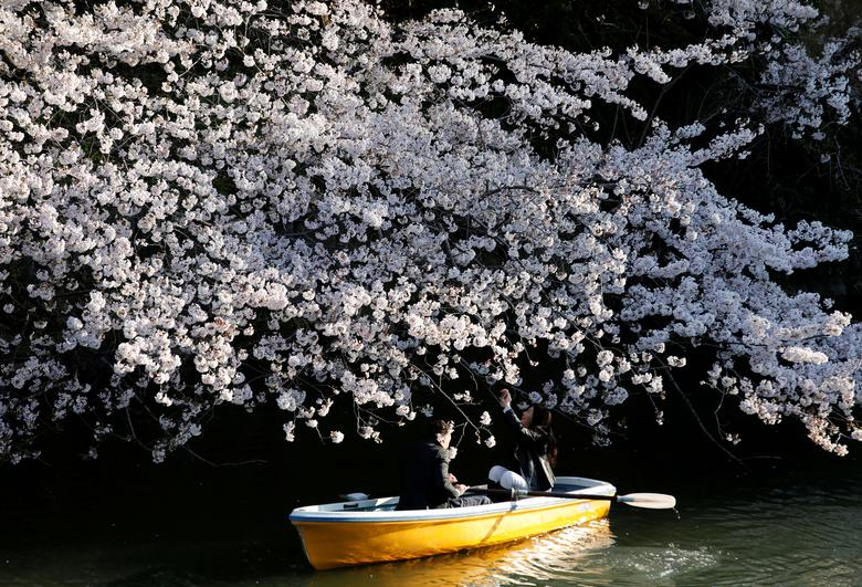 Пара едет на лодке под вишней в Токио.