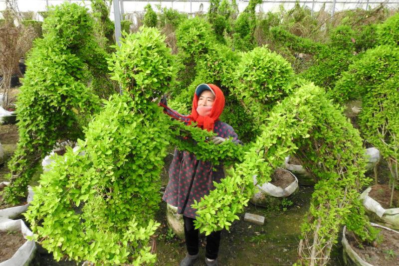 Садовник подрезает кусты