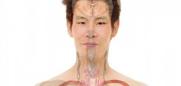 Трансплантация головы