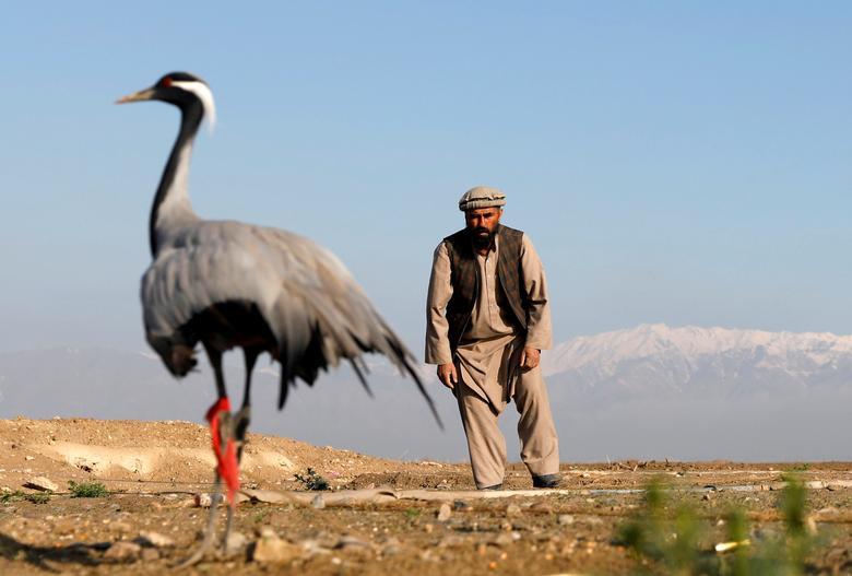 афганский охотник