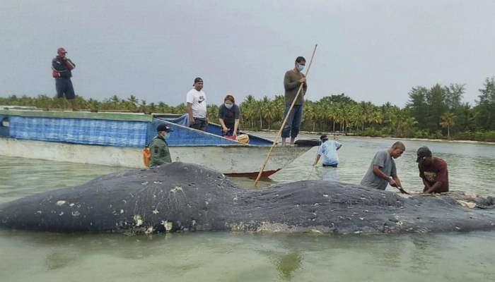 кит италия