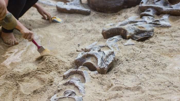 кладбище динозавров