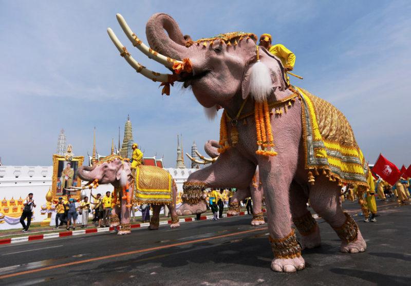 Десять слонов