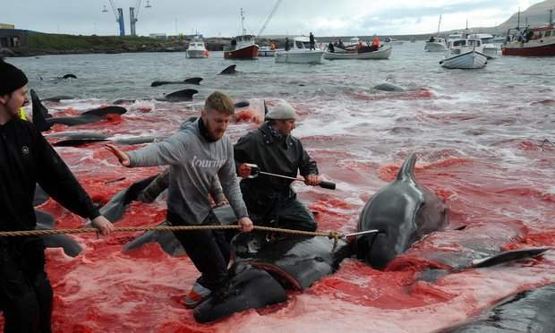 Забой китов