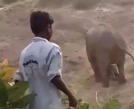 Индия слон