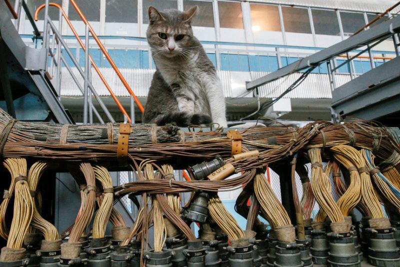 Кошка на кабелях