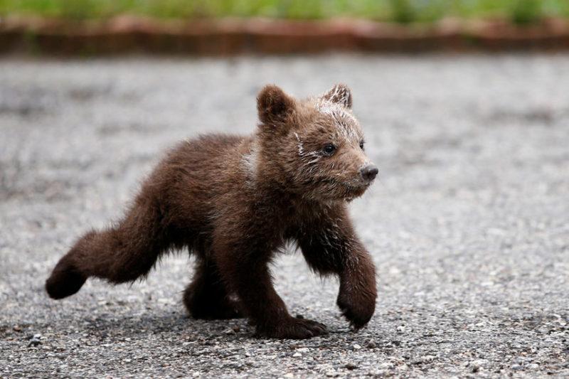 Медвежонок в приюте