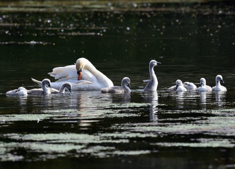 Озеро Пемброк, Уэльс, Великобритания.