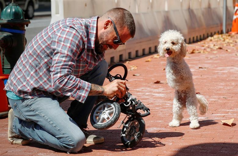 Собака с ампутированными конечностями