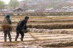 засуха северная Корея