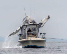 кит прыгает