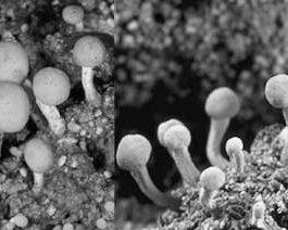 марс грибы