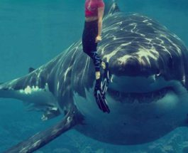 нападение акулы