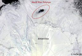полынья антарктида