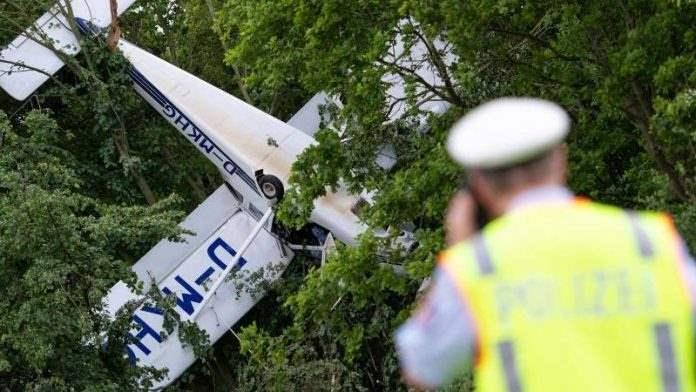 самолет на дереве