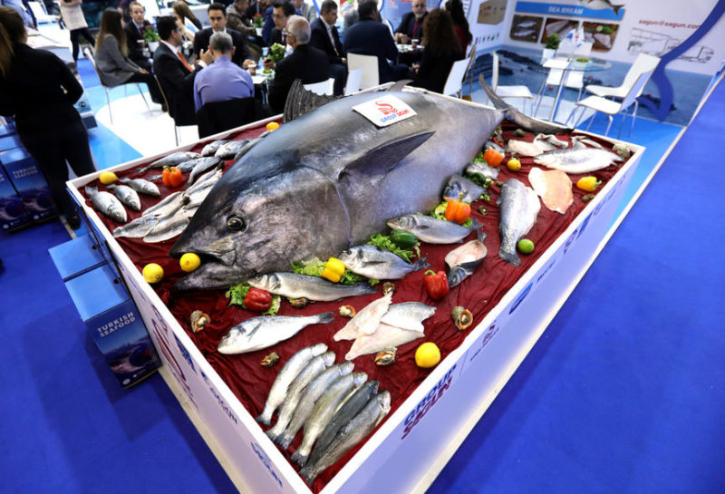 300-кг тунец