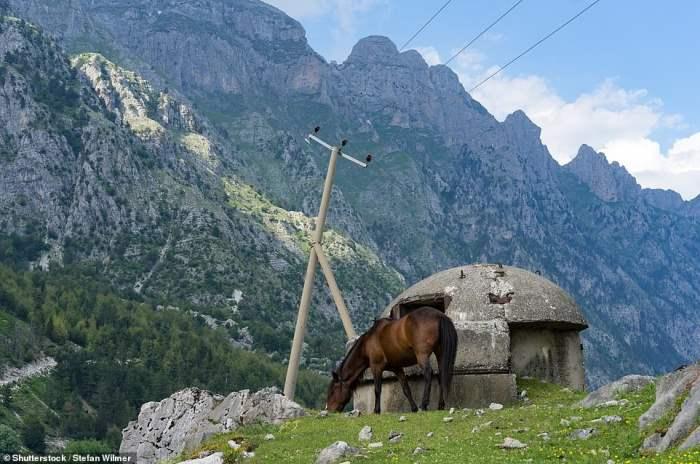 Лошадь пасется на лугу