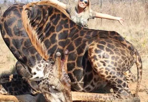 Американка убила редкого жирафа