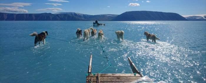 Гренландия собаки тонут