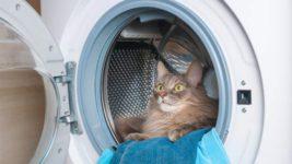 Кошка потратила 9 жизней