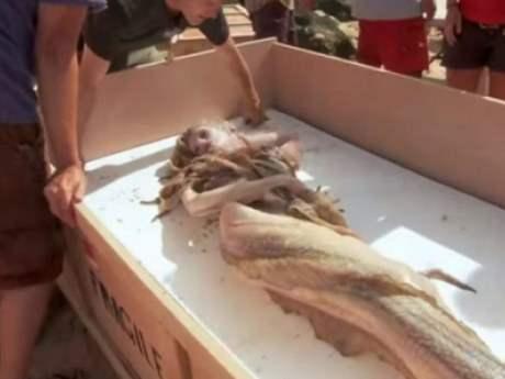 Мертвая русалка