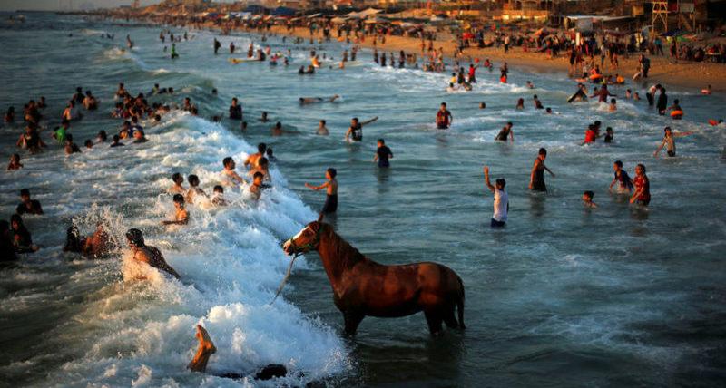 Палестинец моет свою лошадь