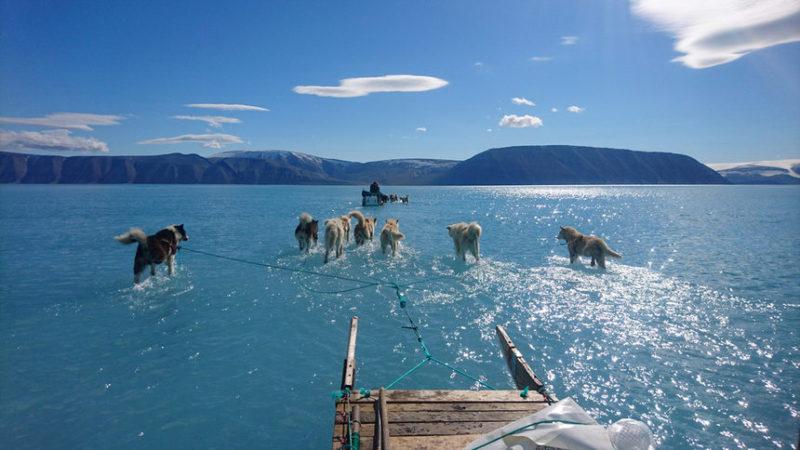 Собаки в упряжке тянут сани по ледяной воде