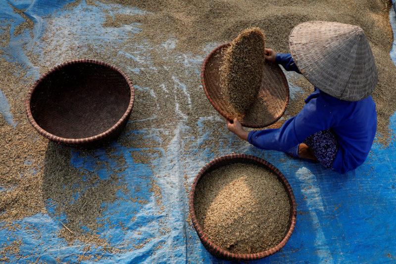 Фермер работает на рисовом поле