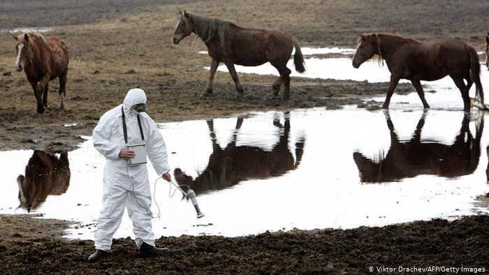 Чернобыль Животные