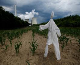 Чучело в поле кукурузы