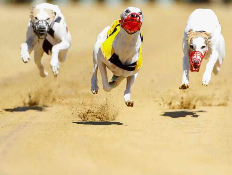 международного собачьего конкурса