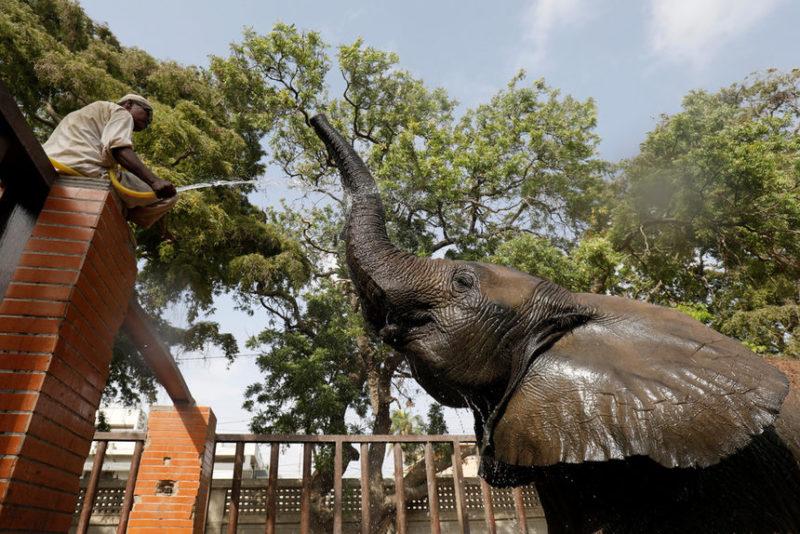 поливает слона