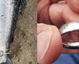 рыба с кольцом