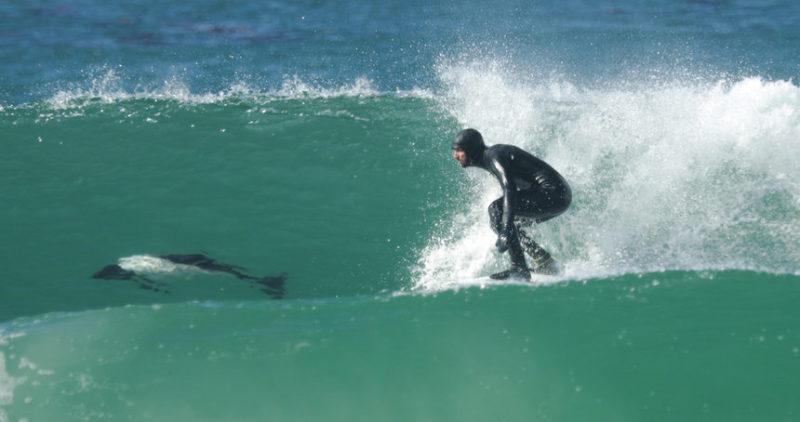 серфингом с дельфинами