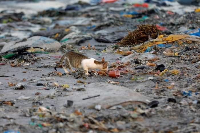 Кошка изображена среди пластиковых отходов
