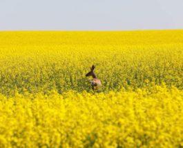 В сельской местности Альберты