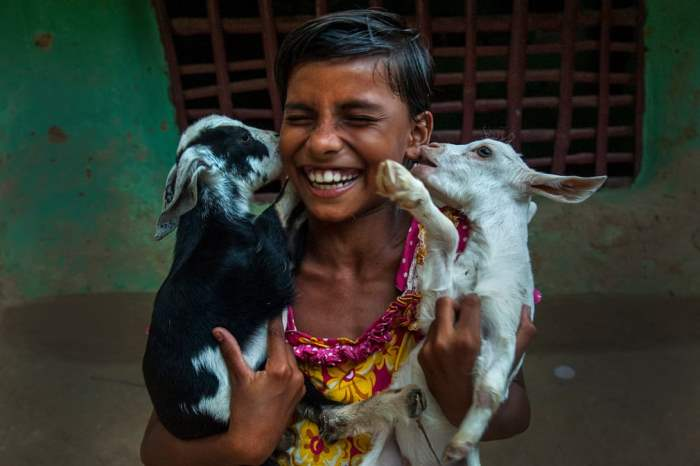Девочка играет со своими домашними козами