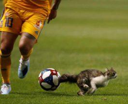 Кот прервал игру