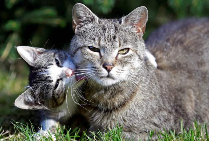 Кошки в деревне
