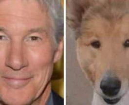 Найдена собака, похожая на Ричарда Гира