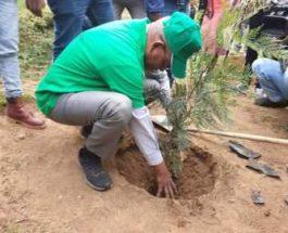 Эфиопия деревья