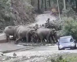 слоны и машины