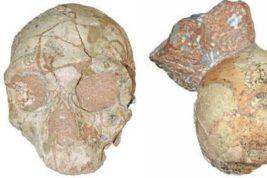 череп старейший
