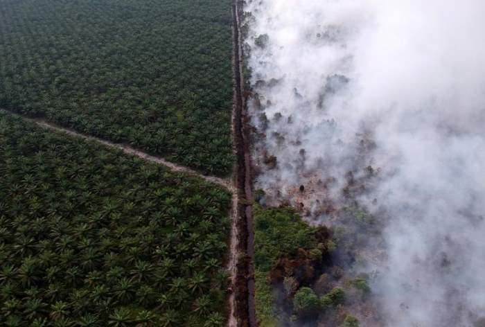 Вид с воздуха лесного пожара