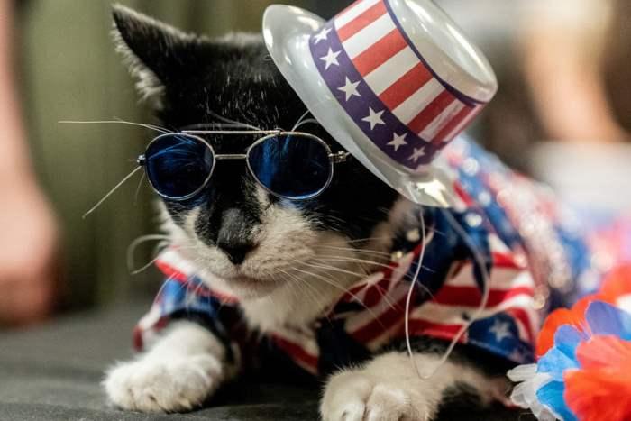 Ежегодная выставка кошек в Нью-Йорке