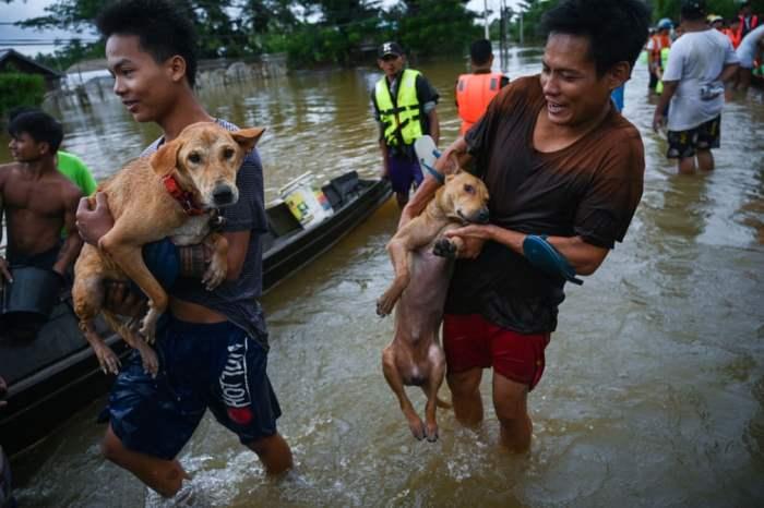 Жители несут своих собак