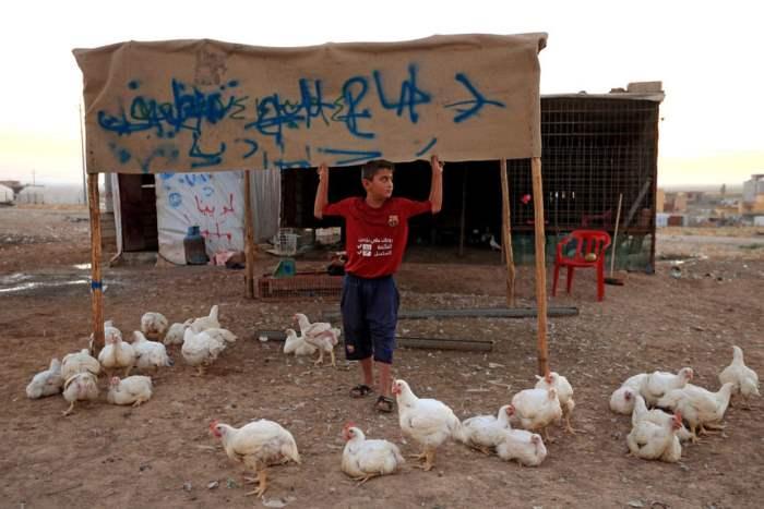 Мальчик продает кур