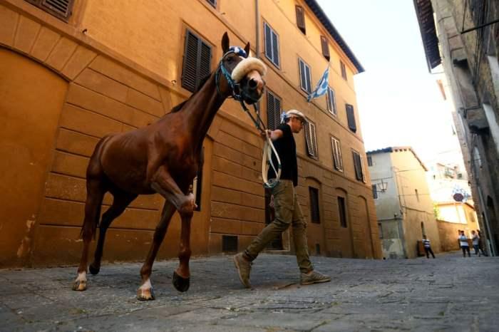 Мужчина гуляет с лошадью