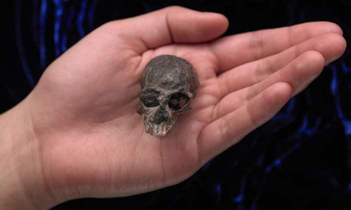 Окаменелый череп Chilecebus carrascoenis