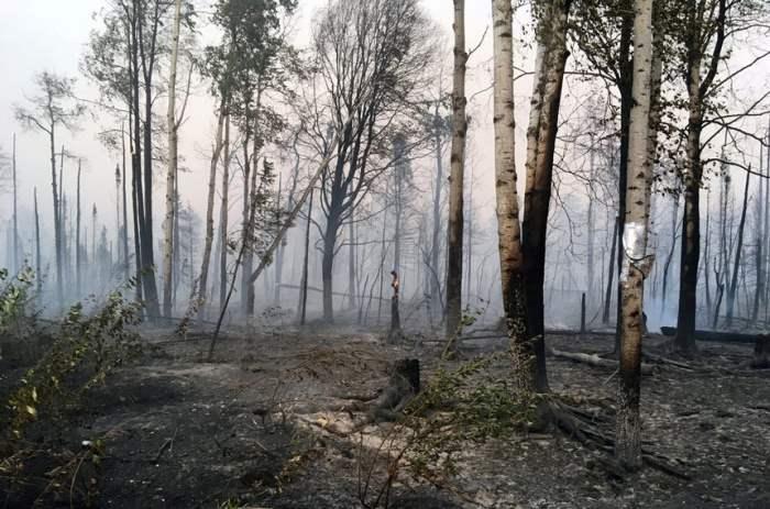 Последствия лесного пожара на Аляске.